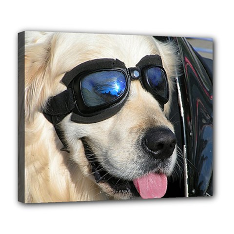 Cool Dog  Deluxe Canvas 24  X 20  (framed)