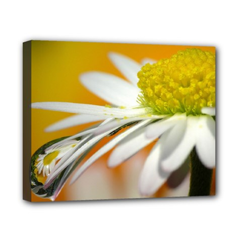 Daisy With Drops Canvas 10  x 8  (Framed)