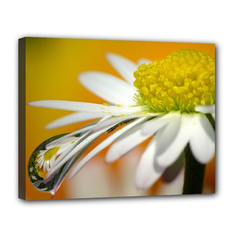 Daisy With Drops Canvas 14  X 11  (framed)