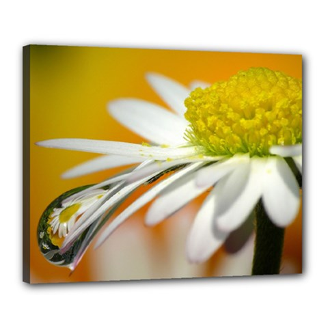 Daisy With Drops Canvas 20  x 16  (Framed)