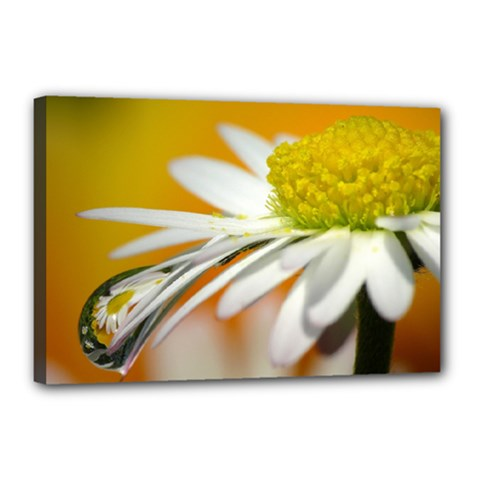 Daisy With Drops Canvas 18  x 12  (Framed)