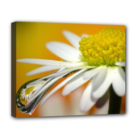 Daisy With Drops Deluxe Canvas 20  x 16  (Framed)