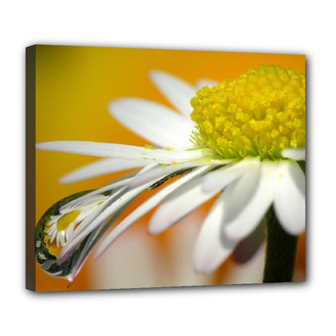 Daisy With Drops Deluxe Canvas 24  x 20  (Framed)