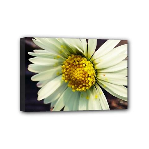 Daisy Mini Canvas 6  x 4  (Framed)