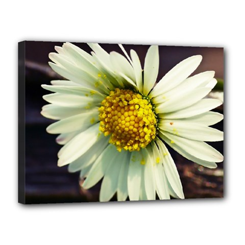 Daisy Canvas 16  x 12  (Framed)