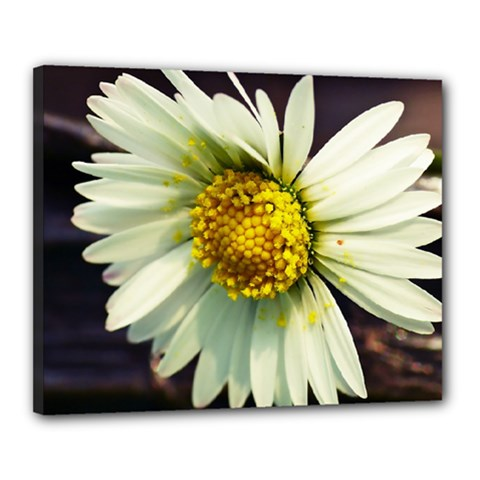 Daisy Canvas 20  X 16  (framed)