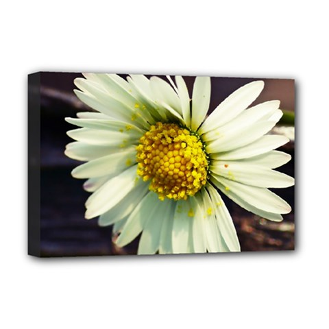 Daisy Deluxe Canvas 18  x 12  (Framed)