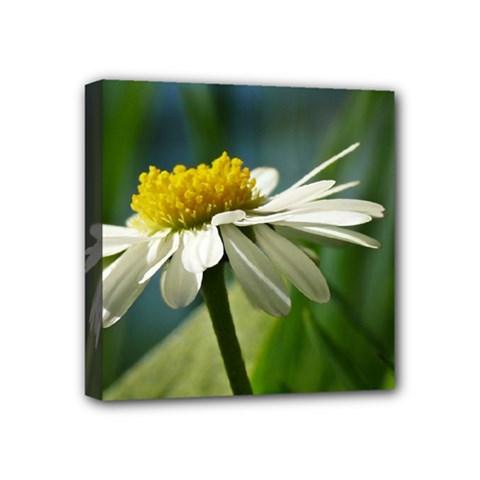 Daisy Mini Canvas 4  x 4  (Framed)