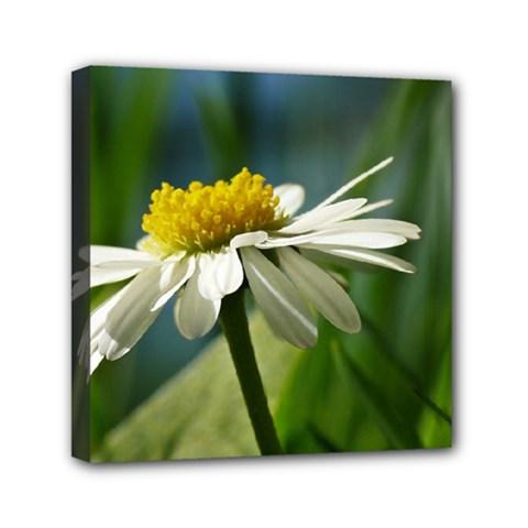 Daisy Mini Canvas 6  x 6  (Framed)