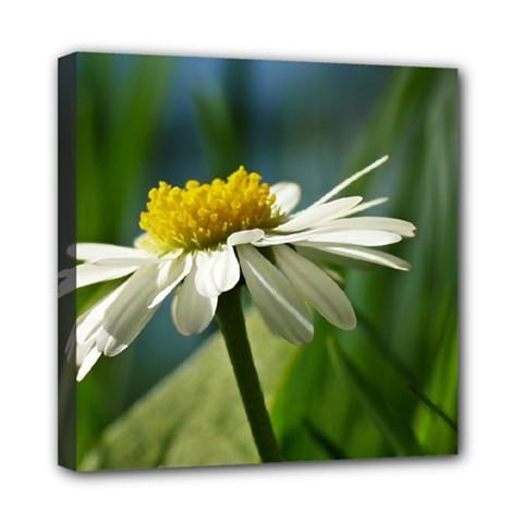 Daisy Mini Canvas 8  x 8  (Framed)