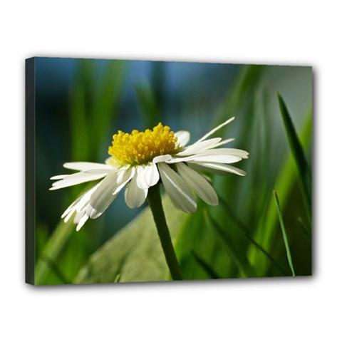 Daisy Canvas 16  x 12  (Framed)
