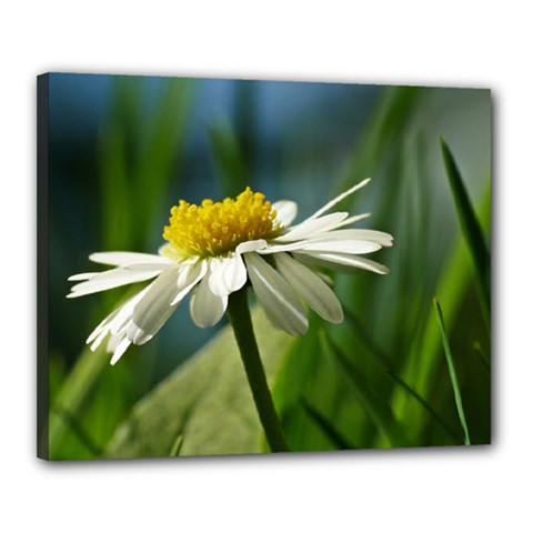 Daisy Canvas 20  X 16  (framed)