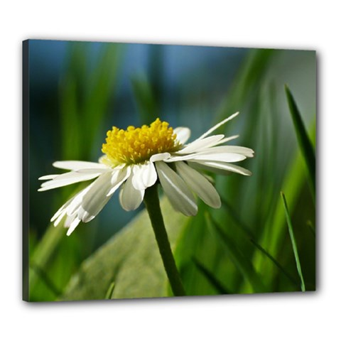 Daisy Canvas 24  X 20  (framed)