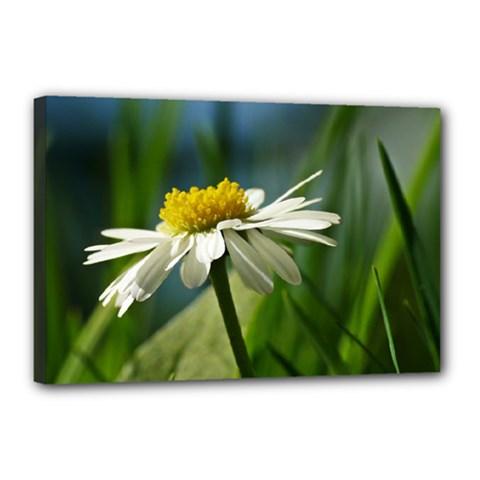 Daisy Canvas 18  X 12  (framed)