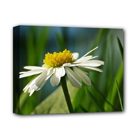 Daisy Deluxe Canvas 14  x 11  (Framed)