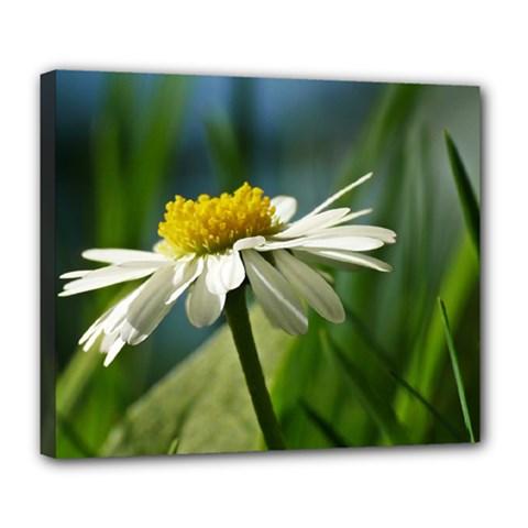 Daisy Deluxe Canvas 24  x 20  (Framed)
