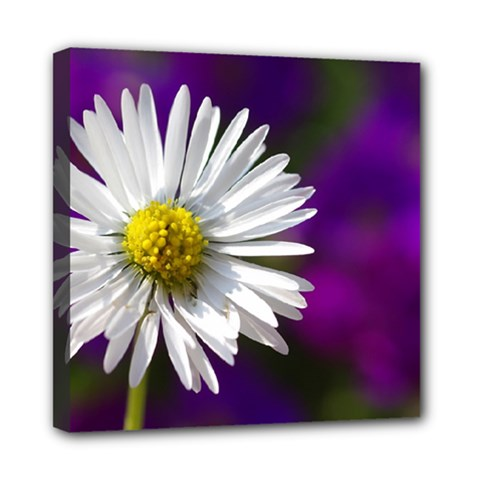 Daisy Mini Canvas 8  X 8  (framed)