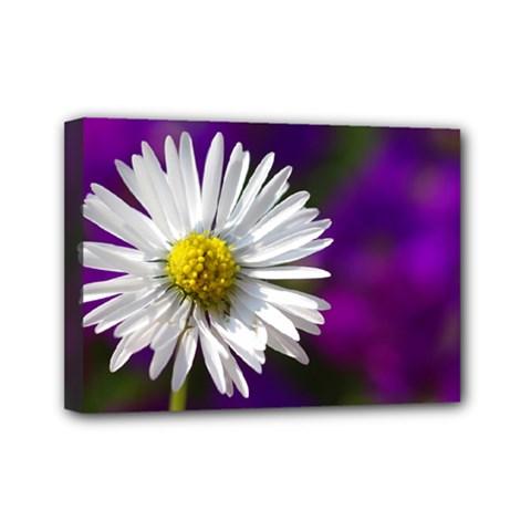 Daisy Mini Canvas 7  x 5  (Framed)