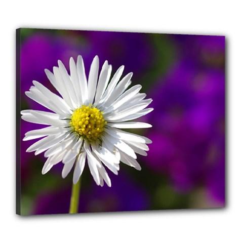 Daisy Canvas 24  X 20  (framed)