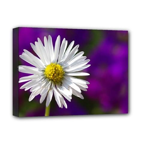 Daisy Deluxe Canvas 16  x 12  (Framed)