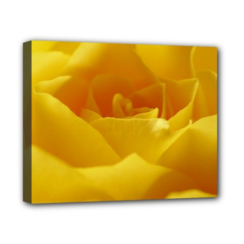 Yellow Rose Canvas 10  x 8  (Framed)