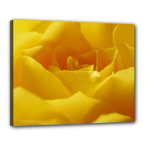 Yellow Rose Canvas 20  x 16  (Framed)