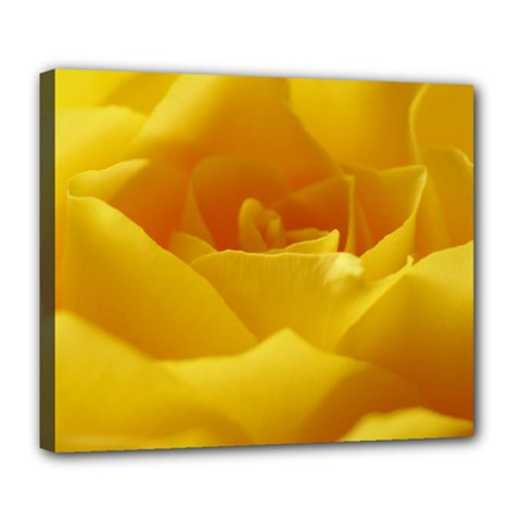 Yellow Rose Deluxe Canvas 24  x 20  (Framed)