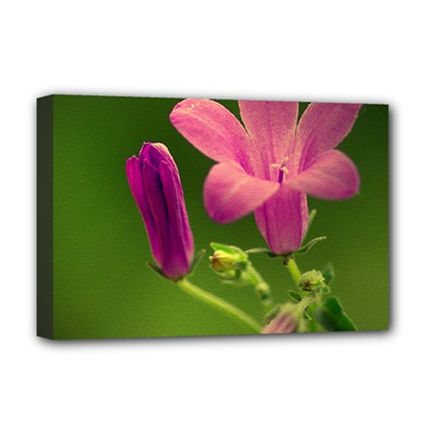Campanula Close Up Deluxe Canvas 18  X 12  (framed)