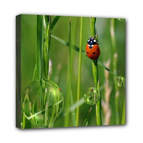Ladybird Mini Canvas 8  x 8  (Framed)