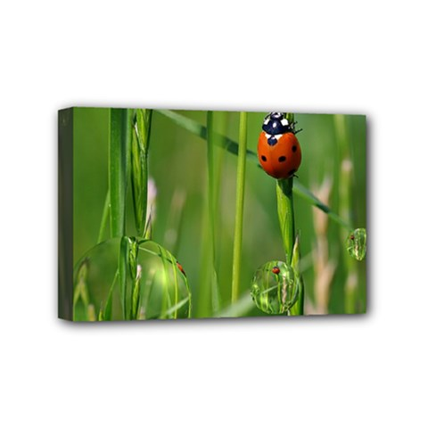 Ladybird Mini Canvas 6  x 4  (Framed)