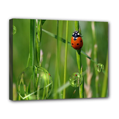 Ladybird Canvas 14  x 11  (Framed)