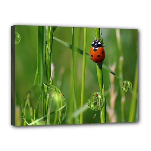 Ladybird Canvas 16  x 12  (Framed)