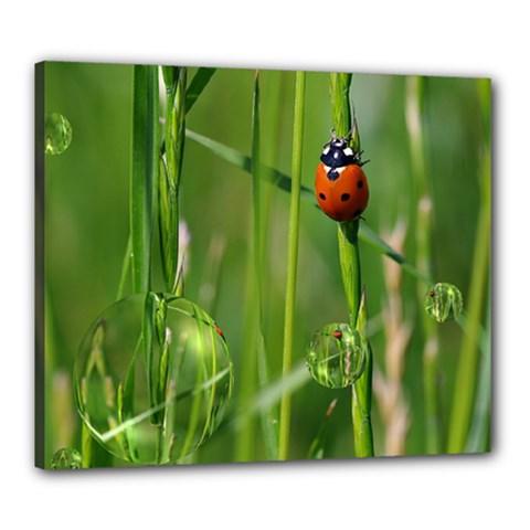 Ladybird Canvas 24  x 20  (Framed)