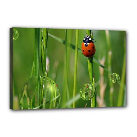 Ladybird Canvas 18  x 12  (Framed)
