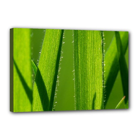 Grass Canvas 18  x 12  (Framed)