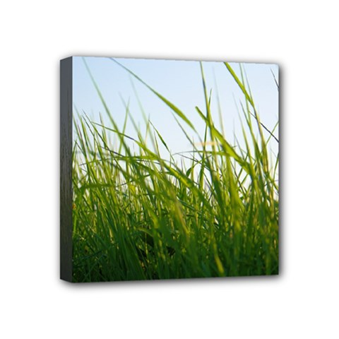 Grass Mini Canvas 4  X 4  (framed)