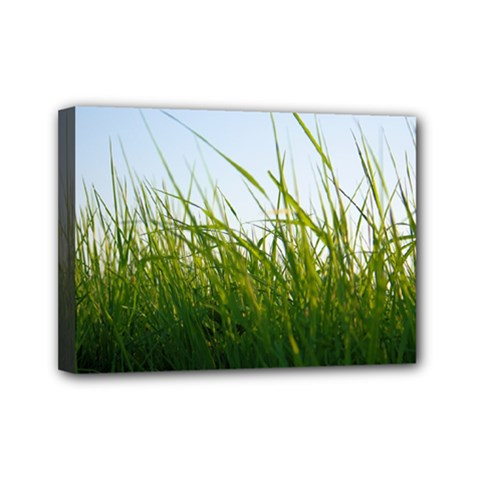 Grass Mini Canvas 7  X 5  (framed)