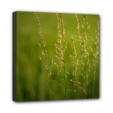 Grass Mini Canvas 8  X 8  (framed)