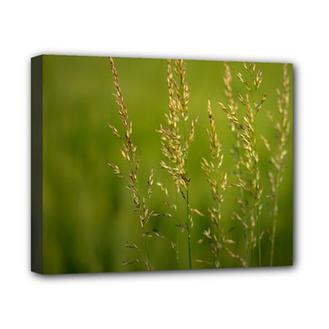 Grass Canvas 10  x 8  (Framed)