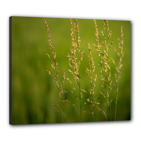 Grass Canvas 24  x 20  (Framed)