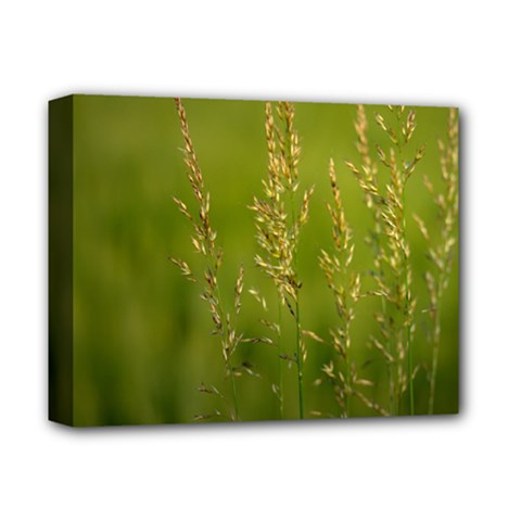 Grass Deluxe Canvas 14  x 11  (Framed)