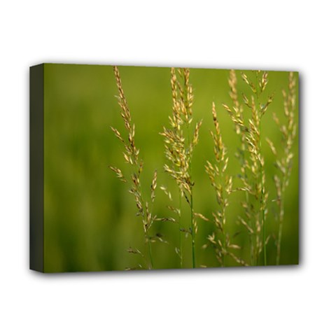 Grass Deluxe Canvas 16  x 12  (Framed)