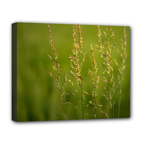 Grass Deluxe Canvas 20  X 16  (framed)