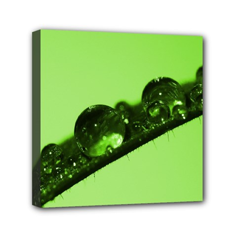 Green Drops Mini Canvas 6  X 6  (framed)