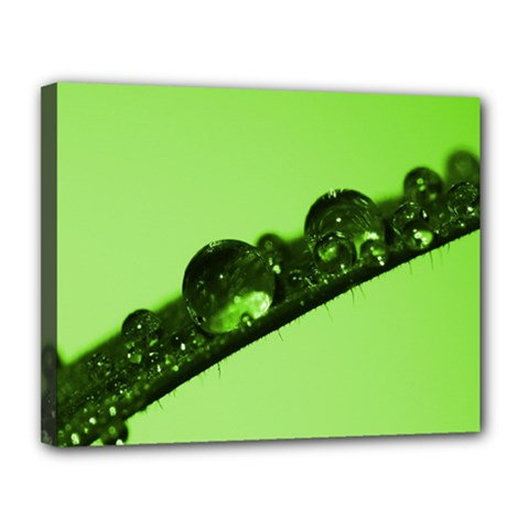 Green Drops Canvas 14  X 11  (framed)