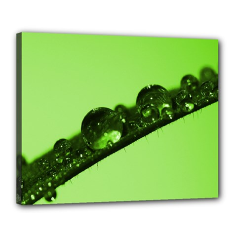 Green Drops Canvas 20  X 16  (framed)