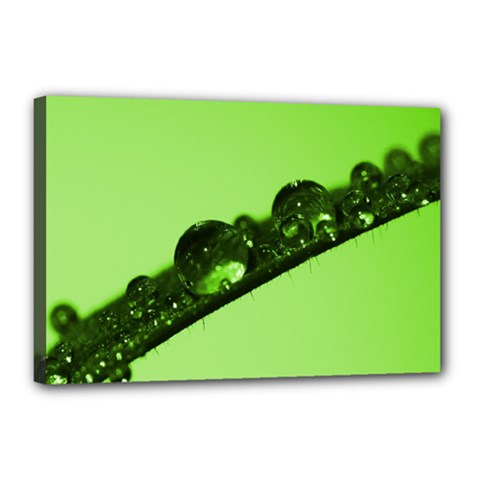 Green Drops Canvas 18  x 12  (Framed)