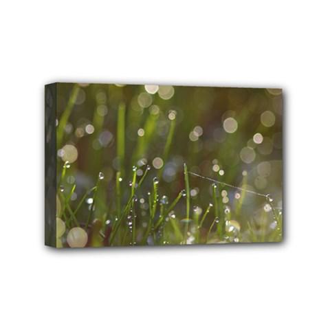 Waterdrops Mini Canvas 6  x 4  (Framed)