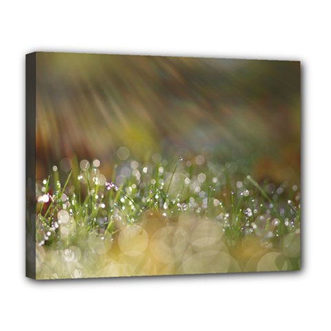 Sundrops Canvas 14  x 11  (Framed)