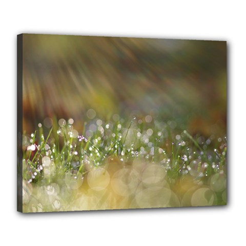 Sundrops Canvas 20  x 16  (Framed)